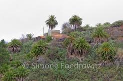 Mit Palmen und Opuntien bewchsener Hang