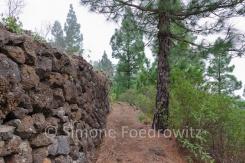 Waldweg an einer Steinmauer