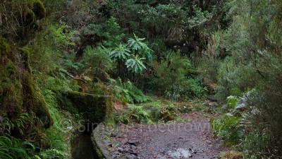 Levada (Wasserkanal) entlang eines bewachsenen Weges