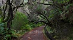 Bäume hängen über einem Weg entlang der Levada (Wasserkanal)