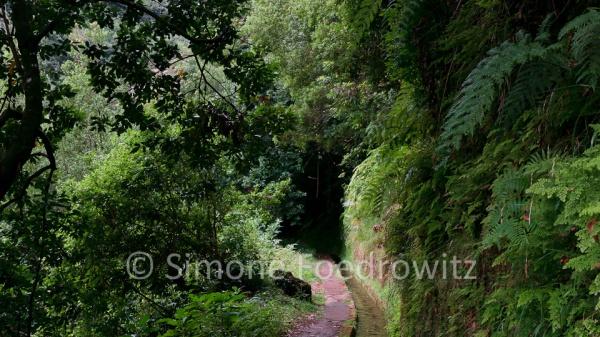 Weg entlang der mit Bäumen bewachsenden Levada (Wasserkanal)