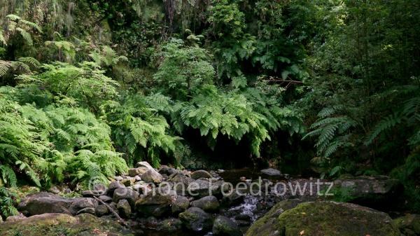 Farnumstandenes Flussbett mit Felsgeröll