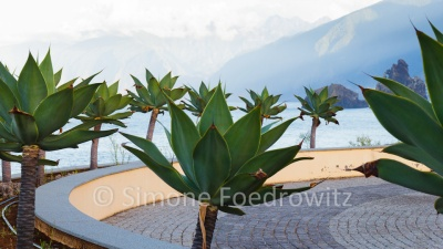 kreisförmige Anpflanzung von Palmen vor der Steilküste