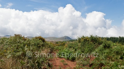 Ebene mit grünen Farn und gelben Ginser mit Wolken in der Ferne