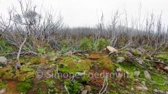 verbrannte Sträucher auf grünem moosbewachsenen Boden