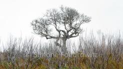 Baum und verkohlte Sträucher