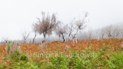 verkohlte Sträucher im Wolkennebel auf braun-grünem Farnboden