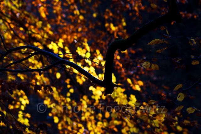 leuchtendes orange-gelbes Herbstlaub am Ast