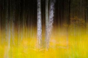 verwischte Birken im gelben Gras