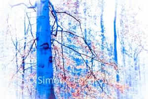 blauer Baumstamm mit orangefarbenen Laub