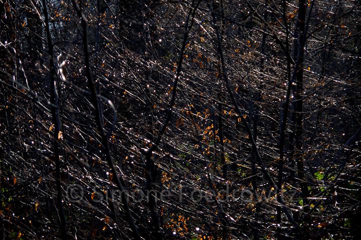 Unterholz im dunklen Wald