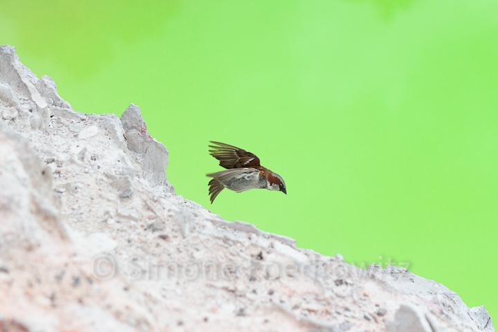 Vogel fliegt in den Abgrund