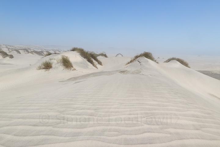 A-0129-dune-farewell-spit