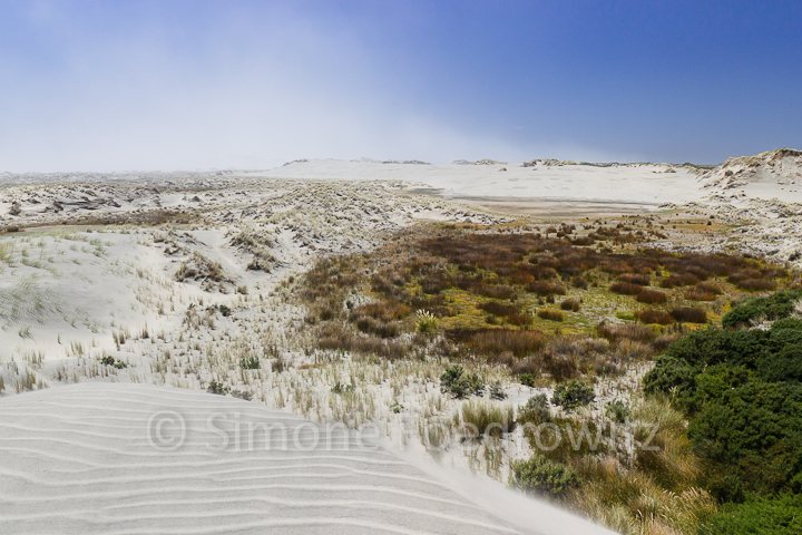 A-0131-vegetation-dune-farewell-spit