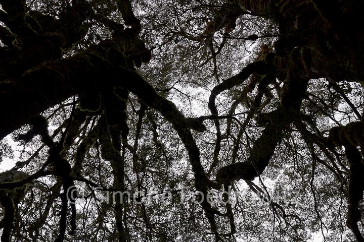Bäume Bodenperspektive