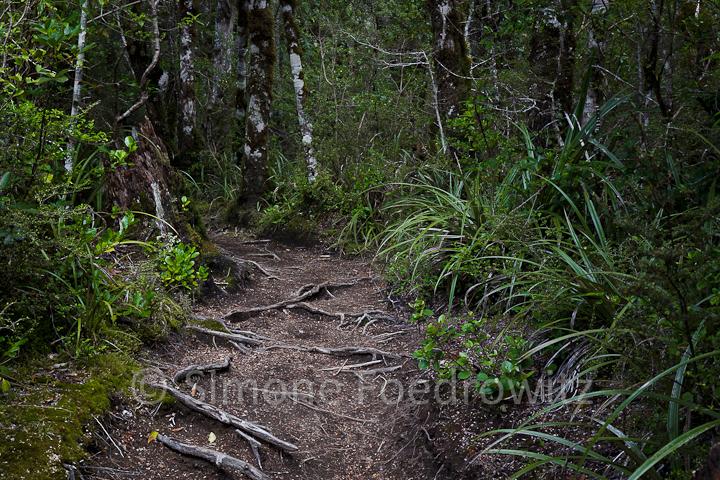 Waldweg mit Wurzeln