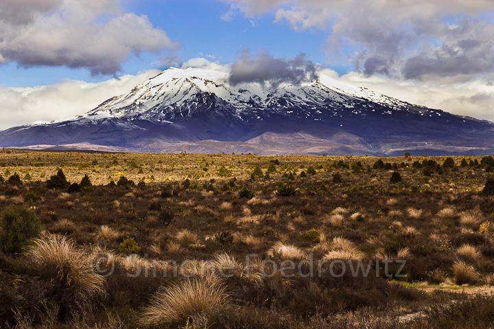 Grasebene vor schneebedecktem Berg
