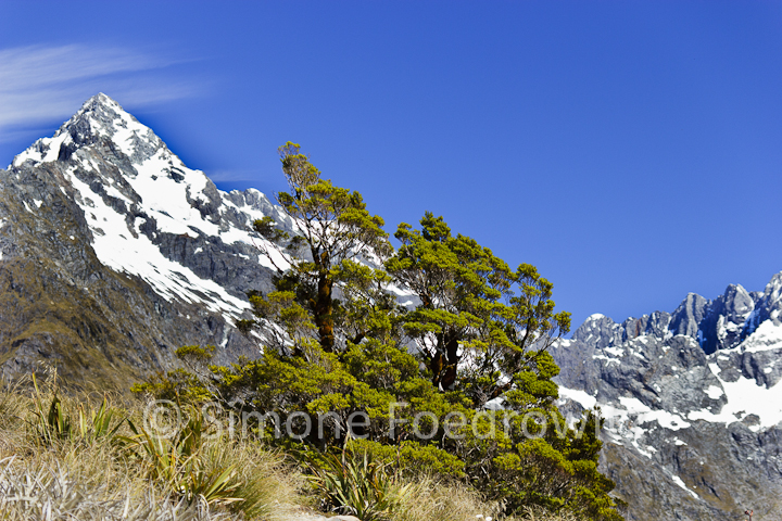 A-0176-routeburne-track-key-summit-alpine-walk-new-zealand