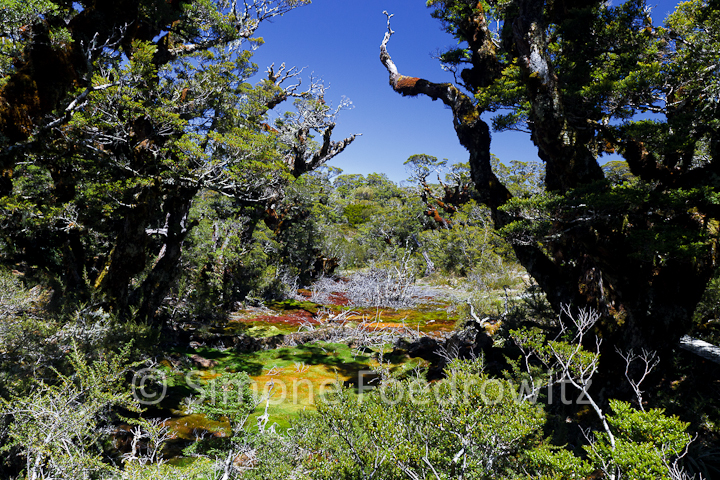 A-0181-key-summit-alpine-nature-walk-new-zealand