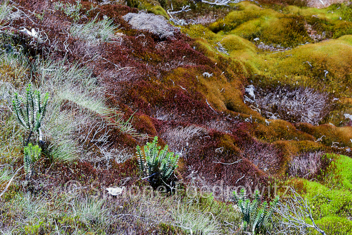 A-0182-key-summit-alpine-nature-walk-new-zealand