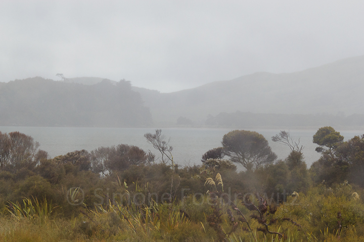 A-196-waikawa-harbour-rain-new-zealand