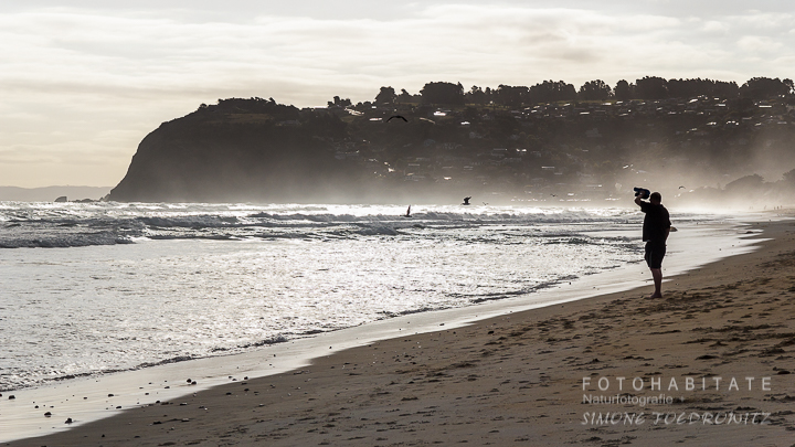 A-203-dunedin-city-beach-st-clair-new-zealand