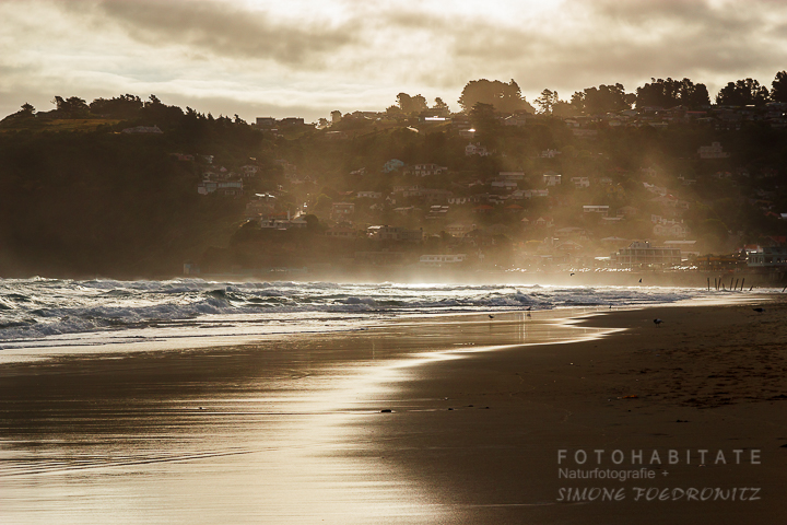A-204-dunedin-beach-st-clair-new-zealand