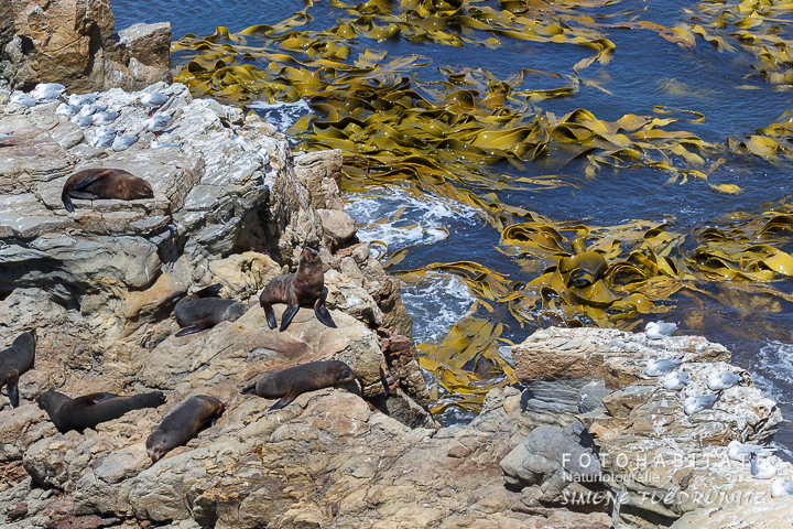 a-229-seals-shag-point-new-zealand