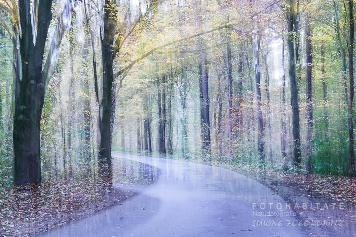 verwischter Waldweg mit buntem Herbstlaub