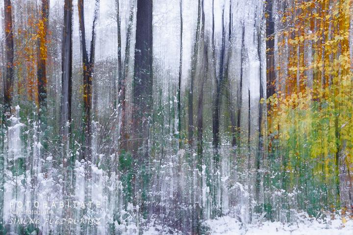 a-276-wischerbild-wald-schnee-intentional-camera-movement-snow-forrest