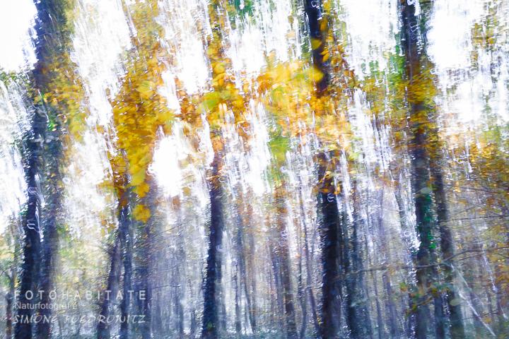 a-277-wischerbild-herbstwald-intentional-camera-movement-autumn-forrest