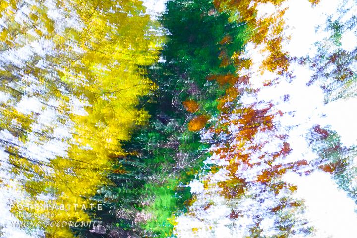 a-278-wischerbild-herbstblaetter-intentional-camera-movement-autumn-leaves