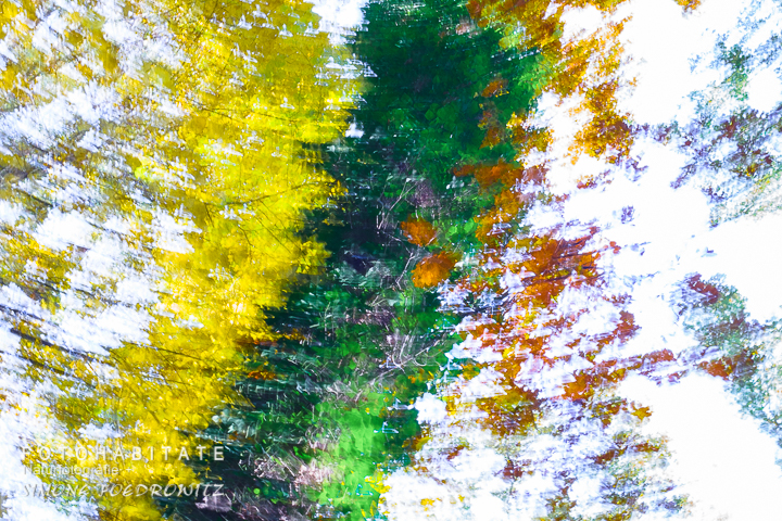 a-278-wischerbild-herbstblaetter-intentional-camera-movement-autumn-leaves