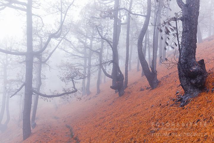 G-0003-fotohabitate_beauty-forest-fire-la-palma