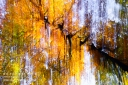 Wischerbild Herbstlaub Krone