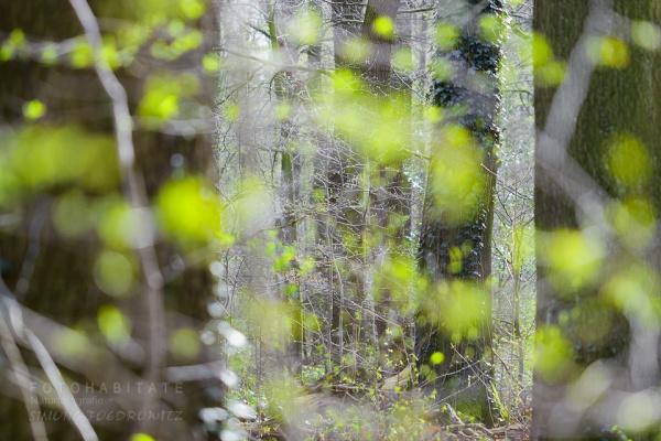 grüne Blätter von Baumstämmen
