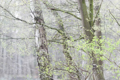 grüner Blätteraustrieb