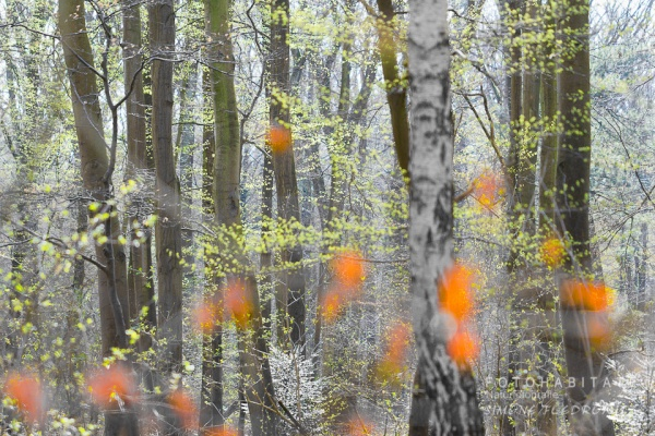 orange Blätter vor Baumstämmen