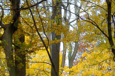 gelb beblätterte Bäume