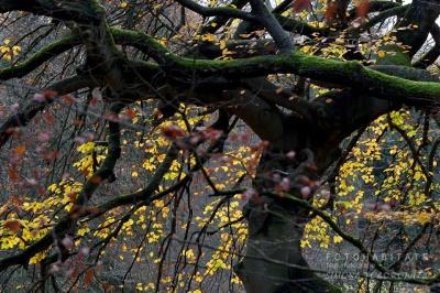 moosbewachsene Baumstämme