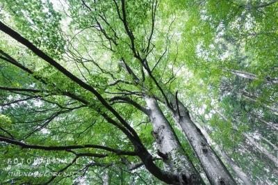 giftgrünes Laub der Baumkronen
