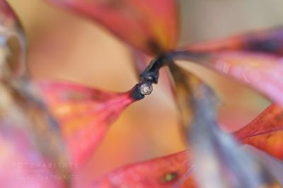 buntes Herbstblatt mit Blattstiel