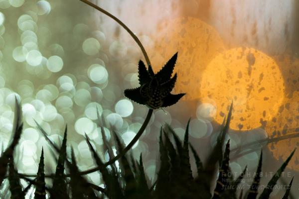 Ableger einer Pflanze vor Lichtreflektionen