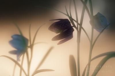 Blüten im Gegenlicht