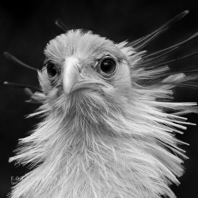 Kopf Vogel (Sekretär)