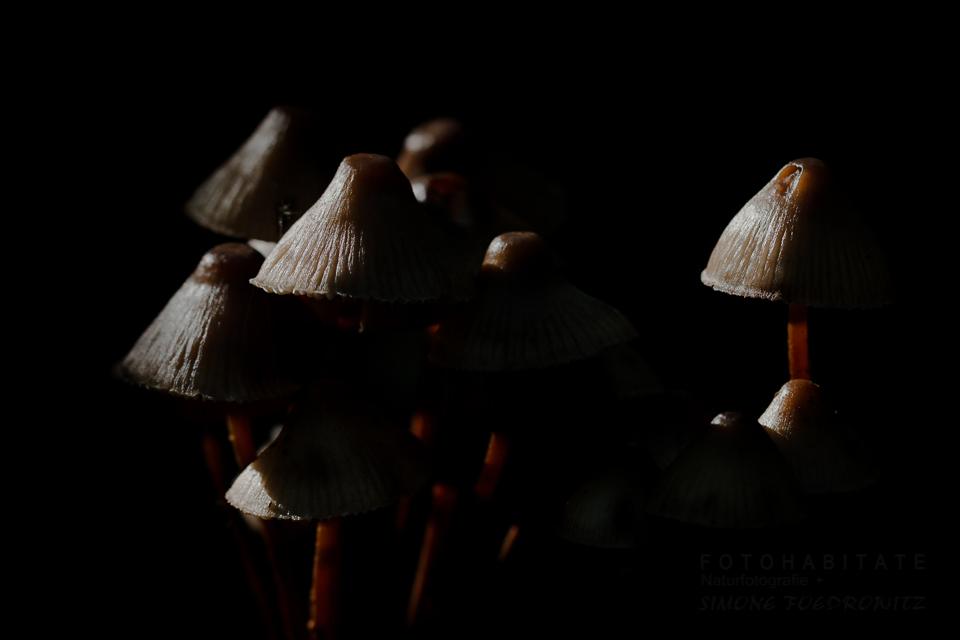 seitwärts beleuchtete Pilzgruppe