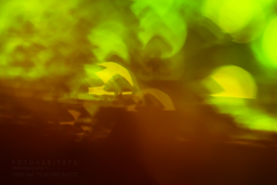 zauberhafte Pilzlichtung im Gegenlicht