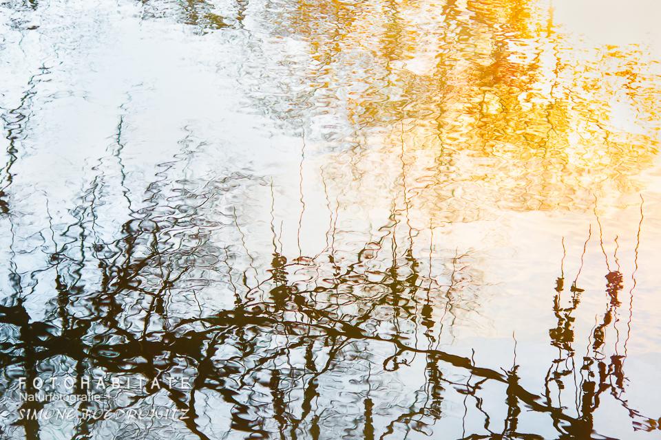 Äste spiegeln sich im Wasser