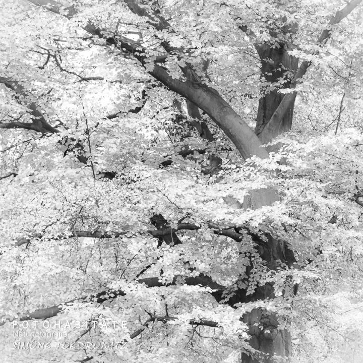 Baum in schwarzweiß