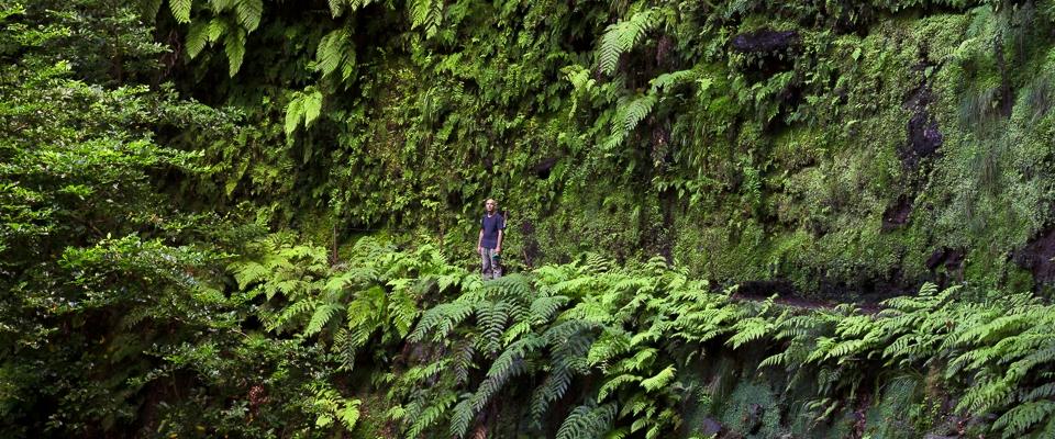 Mann steht an farnbewachsener Felswand